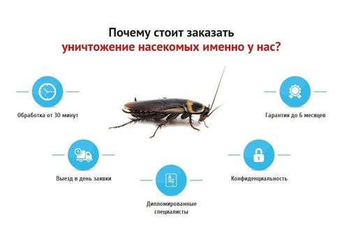 Истребление насекомых и грызунов! Безопасно для человека и домашних животных! Эффект 100%! Звоните! - Клининговые услуги в Севастополе