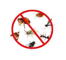 Уничтожение насекомых, грызунов, плесени за 1 раз! Результат гарантируем! Звоните! - Клининговые услуги в Симферополе