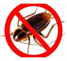 Борьба с рыжими тараканами и другими насекомыми! Безопасно для людей и животных! Гарантии до 5 лет. - Клининговые услуги в Севастополе