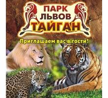 Активный отдых в Крыму – парк львов «Тайган», незабываемые впечатления от общения с дикой природой! - Отдых, туризм в Крыму