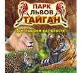 Активный отдых в Крыму – парк львов «Тайган», незабываемые впечатления от общения с дикой природой! - Отдых, туризм в Симферополе