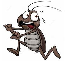 Борьба с насекомыми и грызунами - Клининговые услуги в Севастополе
