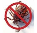 Акарицидная обработка от клещей! Уничтожение всех видов насекомых!Истребление грызунов!Эффект 100%! - Клининговые услуги в Крыму