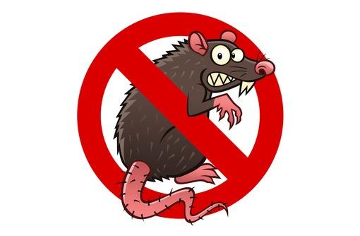 Полное избавление от домовой мыши,полевки,серой крысы(вредители и переносчики множества заболеваний) - Клининговые услуги в Алуште