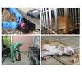 Борьба с полевками, серыми крысами и домовыми мышами в строениях и участках! Европейские стандарты! - Клининговые услуги в Алуште