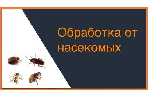 Дезинсекция ( уничтожение насекомых в помещениях и на дворовой территории). Безопасно для здоровья! - Клининговые услуги в Алуште