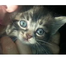 Котята, 1 месяц, в добрые руки - Отдам в добрые руки в Севастополе