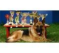 Дрессировка собак, стрижка собак и кошек - Груминг-стрижки в Севастополе