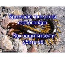 Уничтожение сколопендр и других насекомых вредителей и грызунов! Гарантия 100%! Составление договора - Клининговые услуги в Ялте