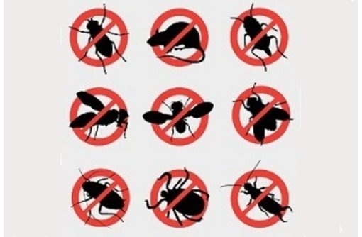 Гарантированное уничтожение любых насекомых, грызунов, вредных микроорганизмов! Профилактика вирусов, фото — «Реклама Бахчисарая»