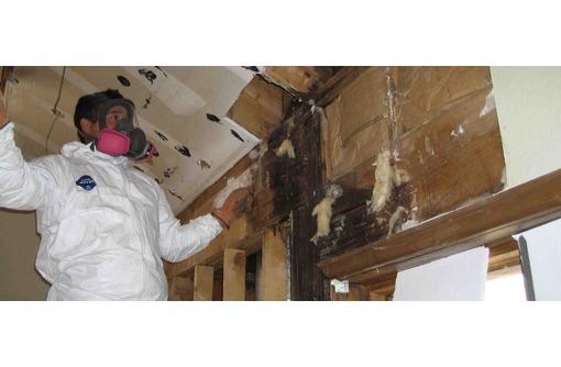 Уничтожение плесени, грибков, вредных микроорганизмов! Истребление крыс и мышей! Гарантия 100%!, фото — «Реклама Фороса»