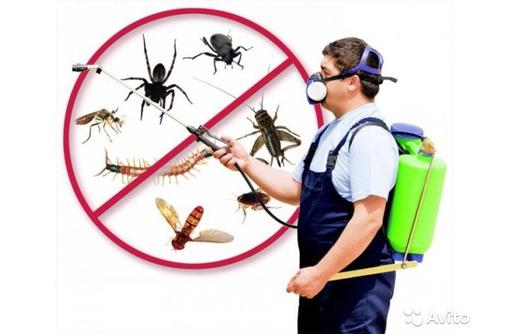 Уничтожение насекомых и грызунов в Евпатории! Дезинфекция, Дезинсекция, Дератизация!Вся документация, фото — «Реклама Евпатории»