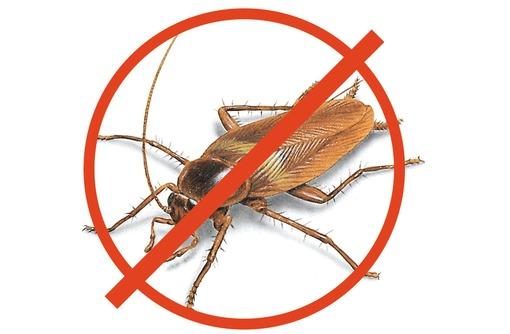 Полное уничтожение с 1 раза всех насекомых сразу в Черноморском районе! Дератизация! Гарантия! - Клининговые услуги в Черноморском