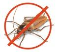 Полное уничтожение с 1 раза всех насекомых сразу в Черноморском районе! Дератизация! Гарантия! - Клининговые услуги в Крыму