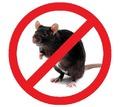 Эффективная борьба со всеми видами грызунов (крысы, мыши, полевки и другие)! Гарантия 100%! Жмите! - Клининговые услуги в Джанкое