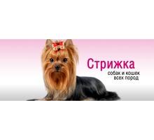 Стрижка кошек и собак в Севастополе - Груминг-стрижки в Севастополе