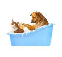Стрижка для кошек и собак. - Груминг-стрижки в Севастополе