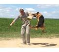 Дрессировка собак всех пород - Дрессировка, передержка в Севастополе