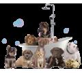 Стрижка собак и кошек в Севастополе - Груминг-стрижки в Севастополе