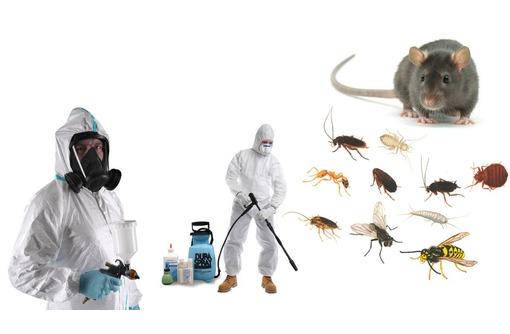 Истребление крыс, мышей и других грызунов (дератизация)! Полный пакет документов! 100 % эффект!, фото — «Реклама Севастополя»