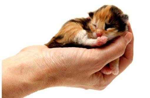Ветеринарная клиника в Симферополе – КВЦ «24 часа»: всегда с заботой о вашем питомце!, фото — «Реклама Симферополя»