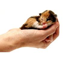 Ветеринарная клиника в Симферополе – КВЦ «24 часа»: всегда с заботой о вашем питомце! - Ветеринарные услуги в Крыму