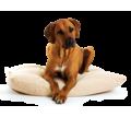 Передержка собак, кошек и других животных в Симферополе - Дрессировка, передержка в Симферополе