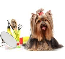 Стрижка кошек и собак, услуги грумера - Груминг-стрижки в Севастополе