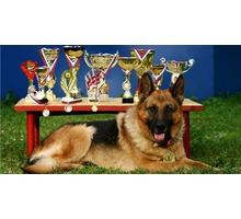 Воспитание и дрессировка собак. - Дрессировка, передержка в Севастополе