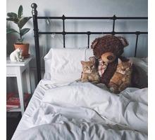 Стрижка собак и кошек, профессионально и красиво - Груминг-стрижки в Севастополе