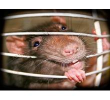 Дератизация! Уничтожение крыс и мышей с 1 раза! Безопасно для людей и животных! Анонимно! Жмите! - Клининговые услуги в Севастополе