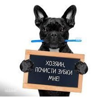 Ультразвуковая чистка зубов - Ветеринарные услуги в Севастополе