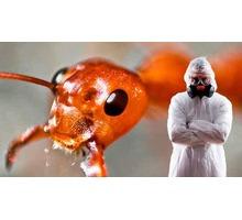 Достали муравьи? Позвоните нам, и мы расскажем какой они приносят вред, и истребим их! Гарантия! ЖМИ - Клининговые услуги в Крыму