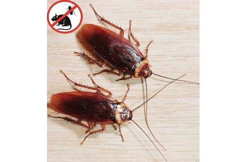Тараканы! Не только не приятные соседи, но и возбудители многих болезней! Анонимно! Безопасно! - Клининговые услуги в Алуште