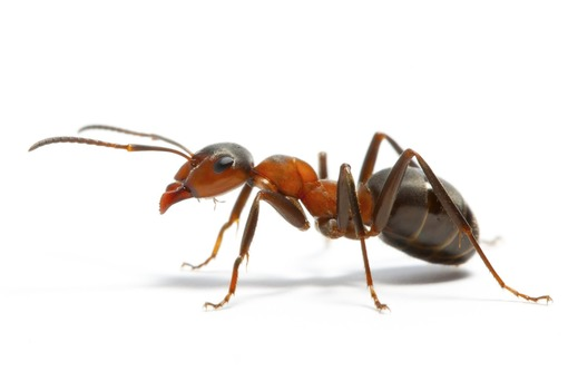 Достали муравьи? Позвоните нам, и мы расскажем какой они приносят вред, и истребим их! Гарантия! ЖМИ - Клининговые услуги в Феодосии