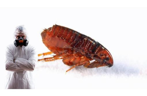 Блохи в Бахчисарае! Вас загрызли блохи? Не тратьте, бесполезно, деньги на бытовую химию!  Жмите!, фото — «Реклама Бахчисарая»