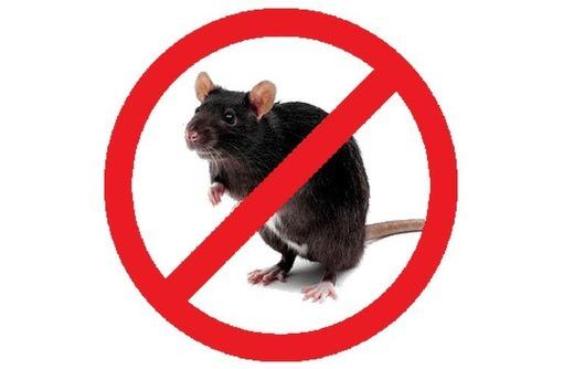 Крысы стали Вашими соседями? не приятно и опасно! Профессиональная дератизация! Безопасно! Жмите! - Клининговые услуги в Белогорске
