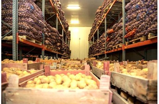 Холодильное Оборудование для Овощей Грибов и Зелени - Продажа в Саках