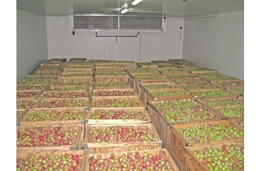 Холодильные Камеры для Хранения Овощей, Картофеля, Лука, Капусты, - Продажа в Саках
