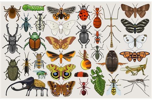 Энтомологическое обследование территории на заселенность клещами, акт энтомологического обследования - Бизнес и деловые услуги в Севастополе