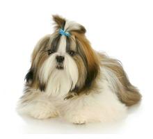 Груминг, стрижка собак и кошек, тримминг - Груминг-стрижки в Севастополе