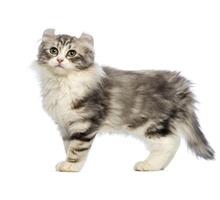 Стрижка собак и кошек в салоне или с выездом на дом к клиенту. - Груминг-стрижки в Севастополе