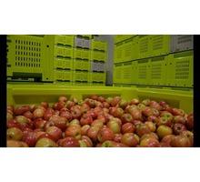 Монтаж холодильных агрегатов для яблок в Крыму - Услуги в Старом Крыму
