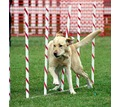 Дрессировка собак всех возрастов и пород - Дрессировка, передержка в Севастополе