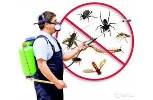 Борьба с вредоносными насекомыми и грызунами, фото — «Реклама Алупки»
