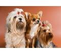 Профессиональная стрижка собак и кошек - Груминг-стрижки в Симферополе