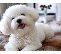 Профессиональный груминг, повседневные и модельные стрижки для собак и кошек - Груминг-стрижки в Симферополе