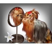 Услуги грумера. Профессиональная стрижка кошек и собак. - Груминг-стрижки в Крыму