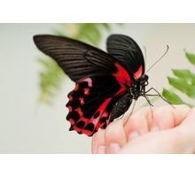 Живые бабочки в подарок в Севастополе – «Дом бабочек в Крыму». Удивите любимых! - Свадьбы, торжества в Севастополе