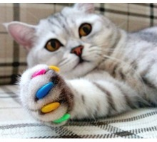 Груминг. Стрижка кошек и собак в салоне и на дому в Симферополе - Груминг-стрижки в Крыму